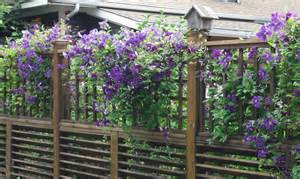 Covered Trellis Clematis Fence Calmwaters Cottage Amp Fly Fishing