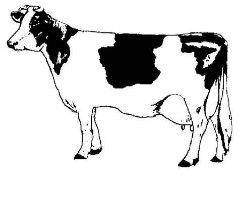 jersey cow coloring page free coloring pages of cows clipart best jersey cow