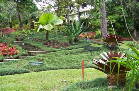 Wilson Botanical Gardens 13 Of Costa Rica S Most Impressive Historical And Wonders