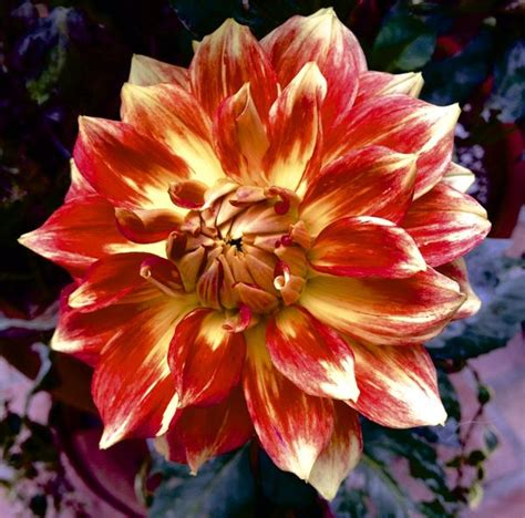 bright colored flowers bright colored flowers