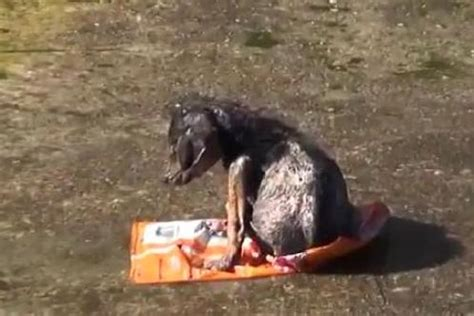 puppies thrown in river animal cruelty i still dogs