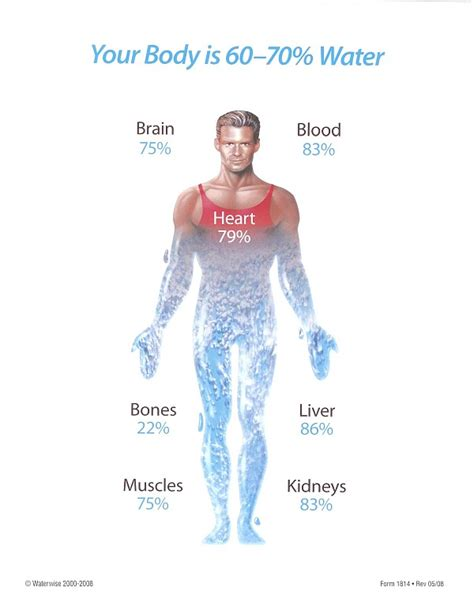 difference b w hydration and hydrolysis fitness coach tip why is water so important and how much