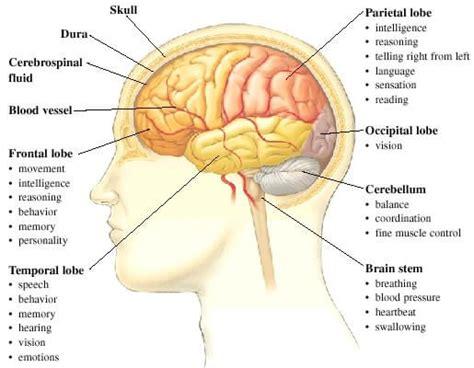 Learn Brain Anatomy Game