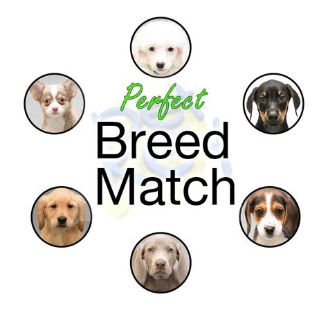 breed matcher puppies for sale adoptable pets and breed profiles petkey