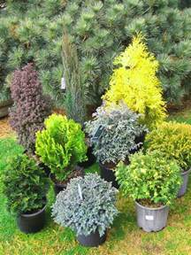 Winter Patio Plants Top 10 Winter Plants To Brighten Up Your Balcony Top
