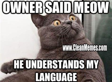 Popular Cat Memes - new trending popular memes clean memes the best the