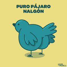 Memes De Nalgones - llegas pacheco buscar con google caricaturitas