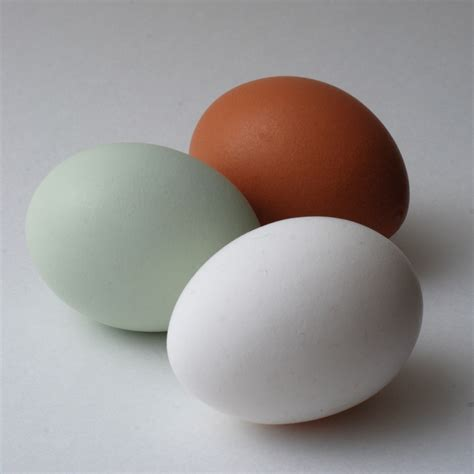 egg colors gms1 genetics of egg color scratch cradle