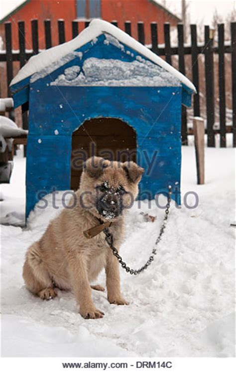funny dog houses pug snow stock photos pug snow stock images alamy