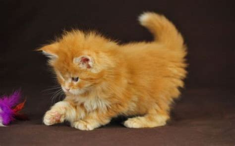 www cute super cute kittens and other awesomely cute animals