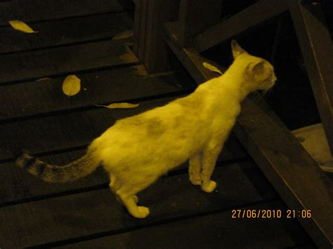 constantly satisfying a cat s curiosity catable by ruan a fleeting stay satisfy your curiosity
