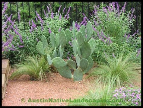 Pin By Tonja Wienck On Landscaping Texas Landscaping