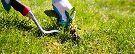 Rasen Ohne Mãƒâ Hen Rasen Entfernen Moos Im Rasen Dauerhaft Entfernen