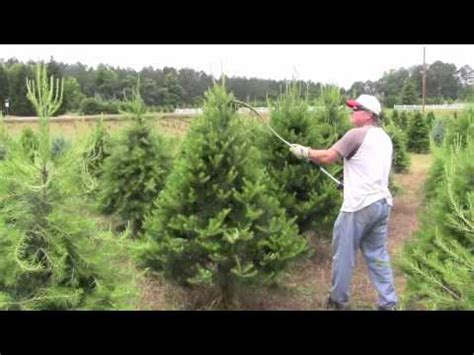 pruning christmas trees with rotary knife youtube