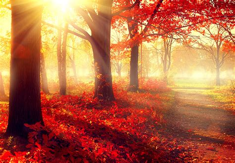 wallpaper 4k autumn wallpaper park 5k 4k wallpaper autumn beautiful