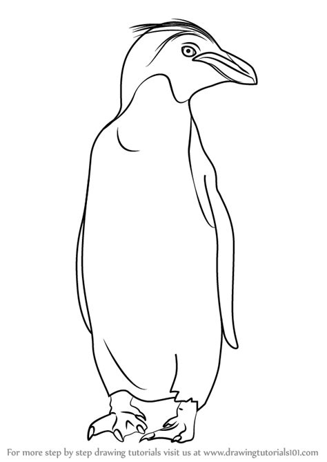 macaroni penguin coloring page step by step how to draw a macaroni penguin