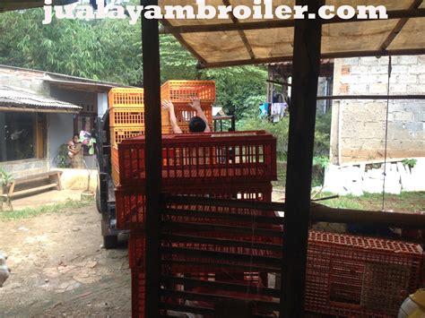 Jual Bibit Ayam Broiler Bogor jual ayam broiler di tajur halang bogor jual ayam broiler