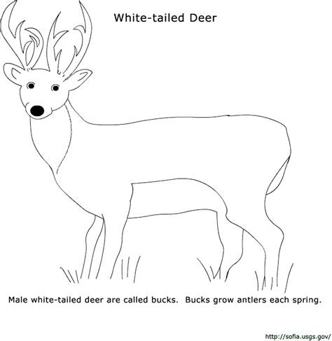coloring pages exles sofia kid s page coloring pages deer