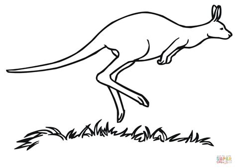 wallaby coloring page printable wallaby coloring page coloring pages