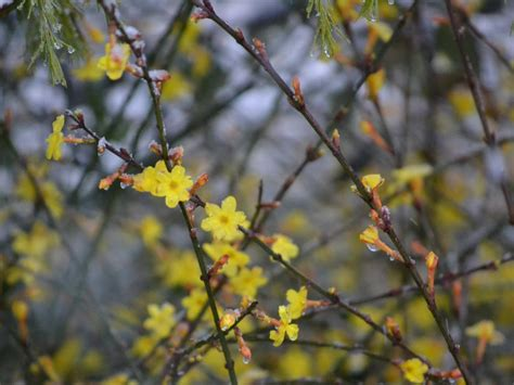 flowers that bloom in winter flowers that bloom in winter hgtv