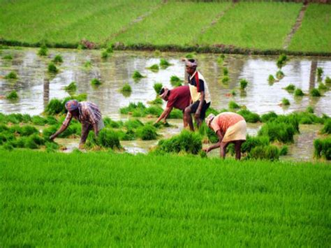 Punjab Agricultural University: Punjab Agricultural ...