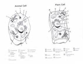 cell coloring worksheet parts of plants coloring pages free coloring pages