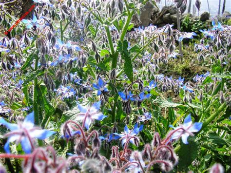 hobby giardino aprile