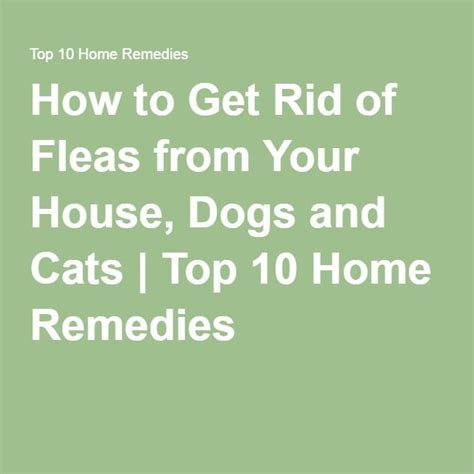 How To Rid Your House Of Fleas by 25 Best Ideas About Home Remedies Fleas On