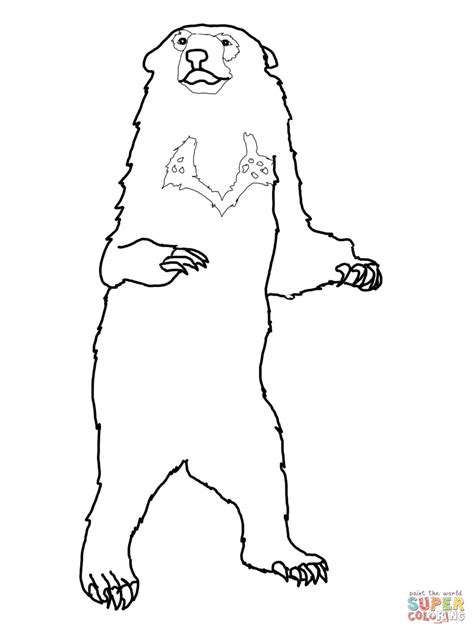 honey bear coloring pages honey bear coloring page free printable coloring pages