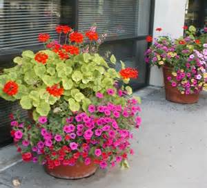 best patio plants colorful outdoor potted plants container gardens