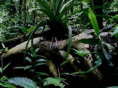 tropisches klima merkmale tropische regenw 228 lder faszination regenwald