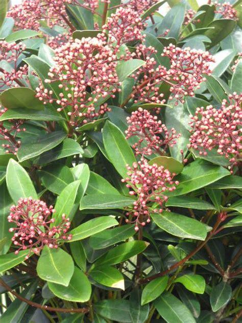 Plante Terre Acide by Plantes De Terre De Bruy 233 Re Plantes Arbres Haies