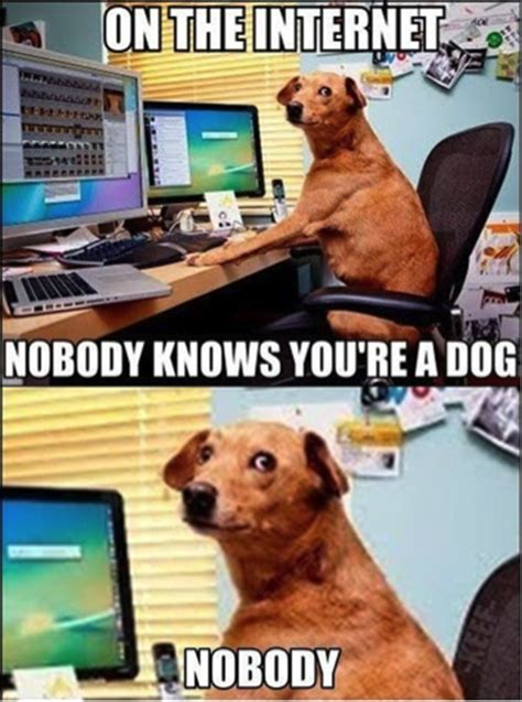 T Dog Memes - will pay to not talk to you how physical services are