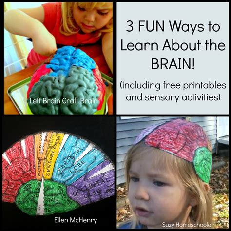 brain crafts for 3 ways to learn about the brain suzy homeschooler