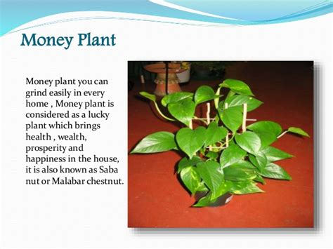 plants for decorating home best plants for interior home decoration with scientific