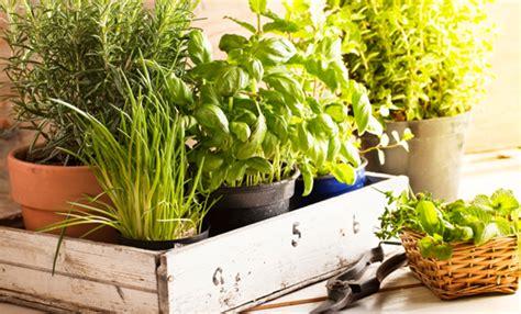 piante aromatiche in giardino come marinare la carne prima della cottura leitv