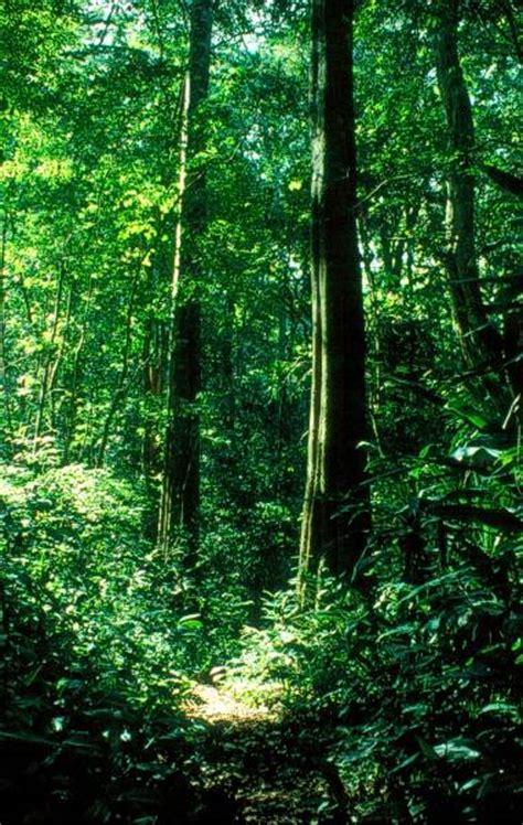 Garten Bäume Kaufen 493 by Pflanzen In Nanopics B 227 226 Ume Pflanzen