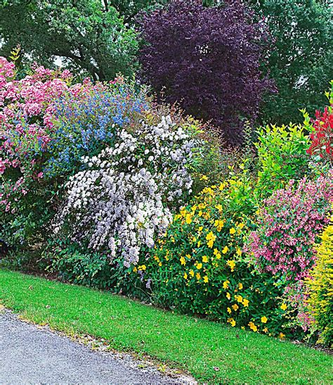 garten hecke sommer hecken kollektion 5 pflanzen g 252 nstig kaufen