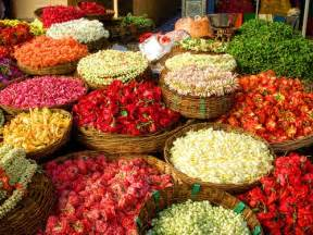 Flower Delivery India - logical philosopher holy cow india part 2