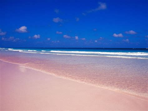 pink sand beach pink sands beach harbour island bahamas lazy penguins