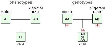 pattern group definition modern human variation bombay phenotype