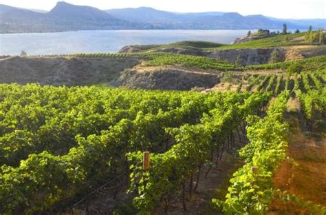 naramata bench wine tours the 10 best things to do in penticton 2018 must see