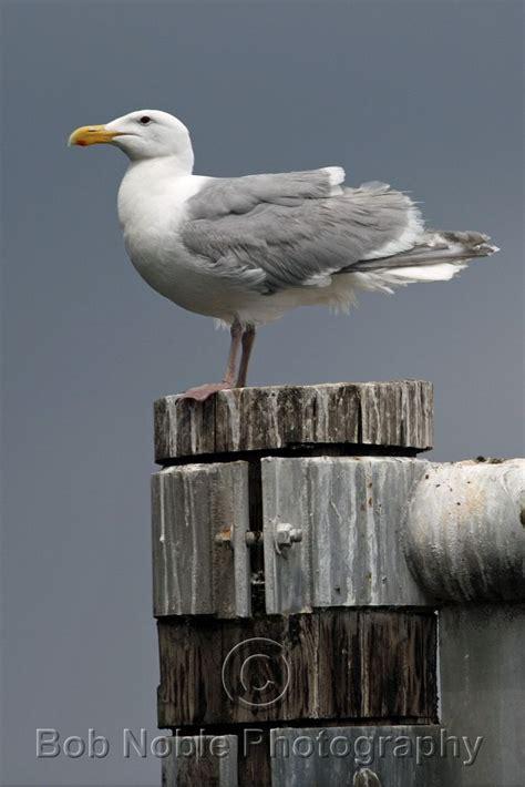 seagull pt defiance boathouse tacoma wa boathouse - Pt Defiance Boathouse