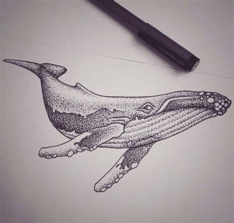 white whale tattoo best 25 humpback whale ideas on whale