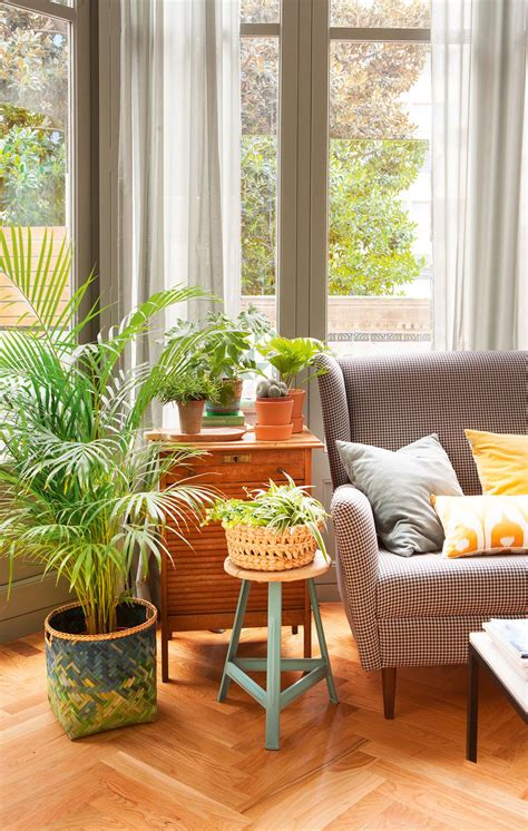 decorar rincon con plantas una casa sana plantas que limpian el aire y purifican el