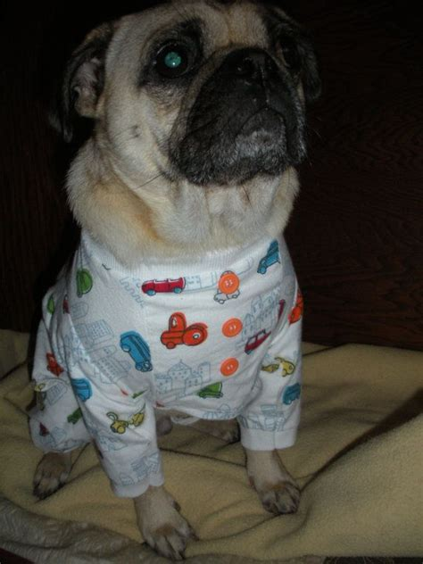 pug pajamas for pugs pug or small one flannel pajamas by pugpossessed on etsy 15 00 pug