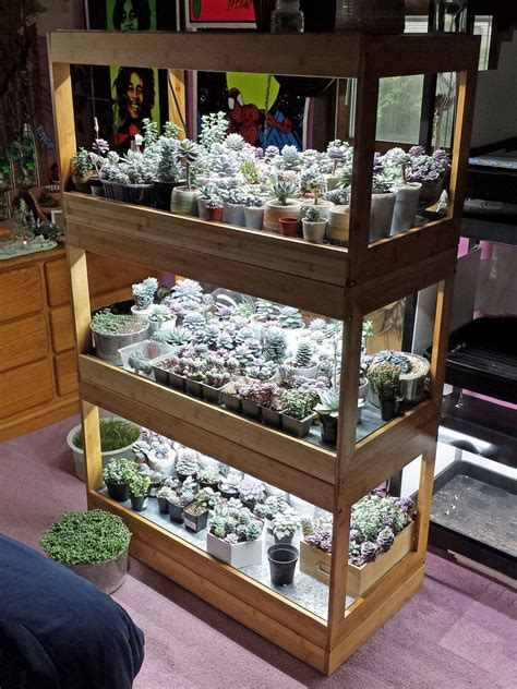 tier bamboo stand  led grow lights  succulents