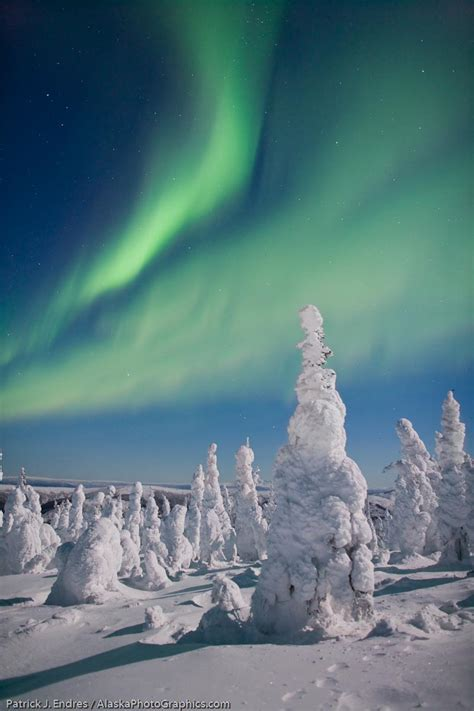 snowy alaskan cluster light tree moon or no moon for borealis photography alaskaphotographics