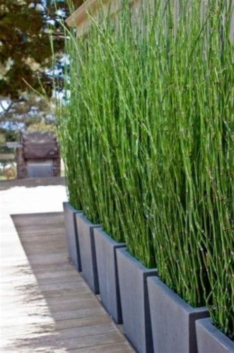 bambus sichtschutz pflanzen garten sichtschutz pflanzen garten und bauen