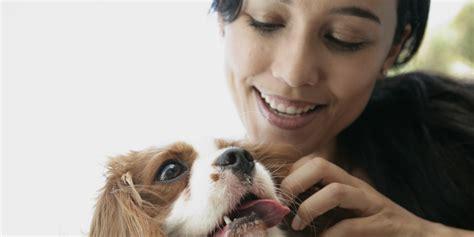 affording fido  cost checklist    pet huffpost